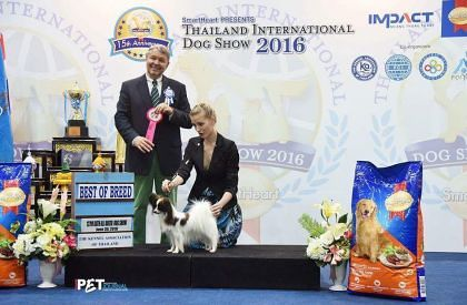 Topwinning Papillon allover the world, here Bangok Impact Dog Show 2016, judged by Mr L. Pichard